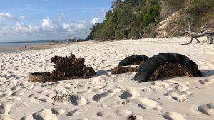 Z-force Commando Training camp Fraser Island
